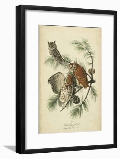 Audubon Screech Owl-John James Audubon-Framed Art Print