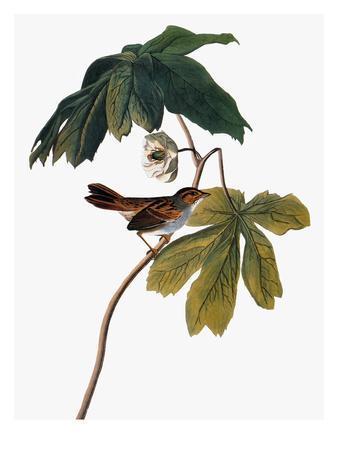 https://imgc.artprintimages.com/img/print/audubon-sparrow-1827-38_u-l-pfc6it0.jpg?artPerspective=n