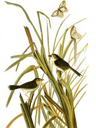 https://imgc.artprintimages.com/img/print/audubon-sparrow-1827_u-l-pfc5pd0.jpg?artPerspective=n
