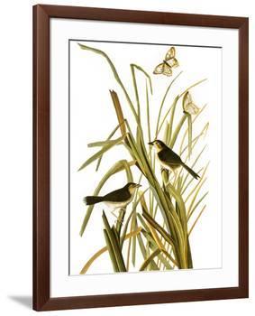 Audubon: Sparrow, 1827-John James Audubon-Framed Giclee Print