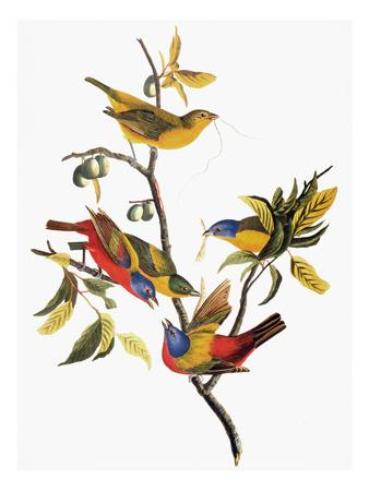 https://imgc.artprintimages.com/img/print/audubon-sparrows_u-l-pfd66j0.jpg?artPerspective=n