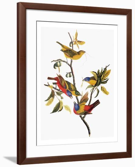 Audubon: Sparrows-John James Audubon-Framed Premium Giclee Print