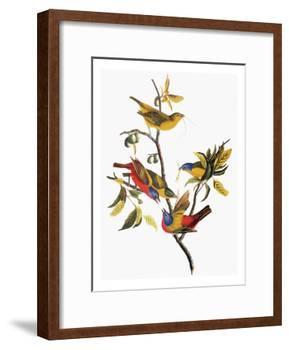 Audubon: Sparrows-John James Audubon-Framed Giclee Print
