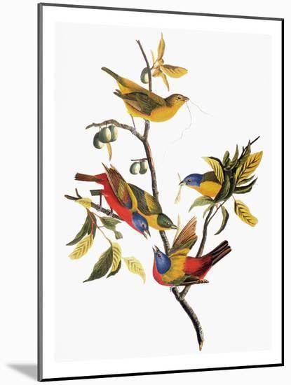 Audubon: Sparrows-John James Audubon-Mounted Giclee Print
