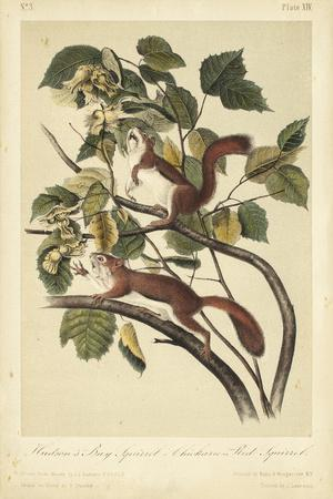 https://imgc.artprintimages.com/img/print/audubon-squirrel-ii_u-l-q1bh72z0.jpg?p=0