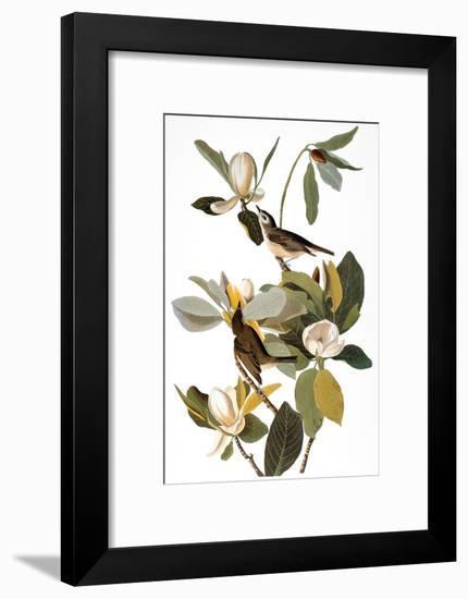 Audubon: Vireo-John James Audubon-Framed Premium Giclee Print