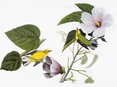 https://imgc.artprintimages.com/img/print/audubon-warbler-1827-38_u-l-pfc5f40.jpg?artPerspective=n