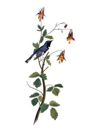https://imgc.artprintimages.com/img/print/audubon-warbler-1827-38_u-l-pfc5xs0.jpg?p=0
