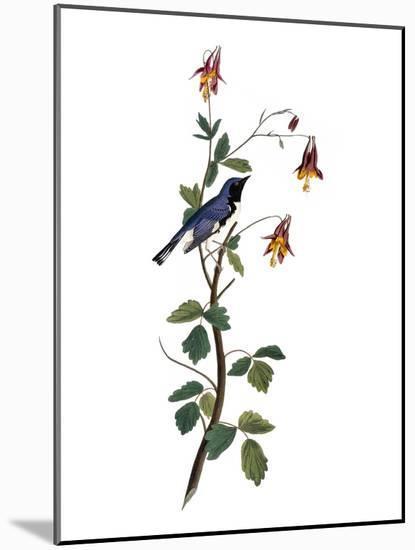Audubon: Warbler, 1827-38-John James Audubon-Mounted Giclee Print