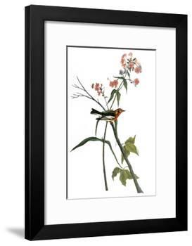Audubon: Warbler, 1827-38-John James Audubon-Framed Premium Giclee Print