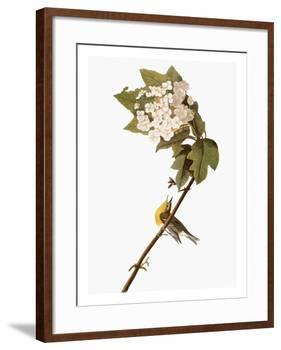 Audubon: Warbler, 1827-38-John James Audubon-Framed Giclee Print