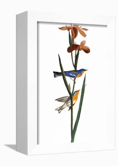 Audubon: Warbler, 1827-John James Audubon-Framed Premier Image Canvas