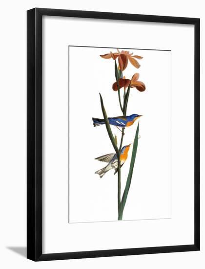 Audubon: Warbler, 1827-John James Audubon-Framed Giclee Print