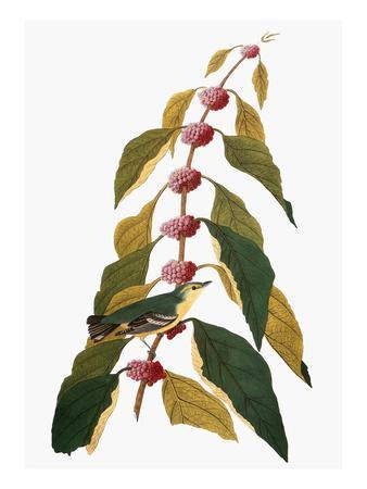 https://imgc.artprintimages.com/img/print/audubon-warbler_u-l-pfc6nu0.jpg?artPerspective=n