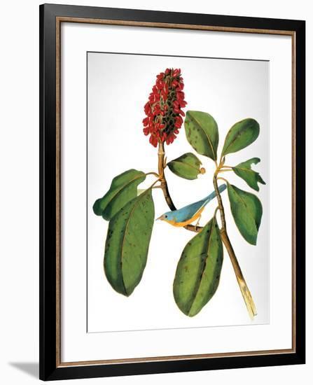Audubon: Warbler-John James Audubon-Framed Premium Giclee Print