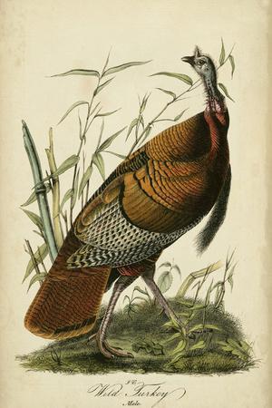 https://imgc.artprintimages.com/img/print/audubon-wild-turkey_u-l-pxn27p0.jpg?p=0