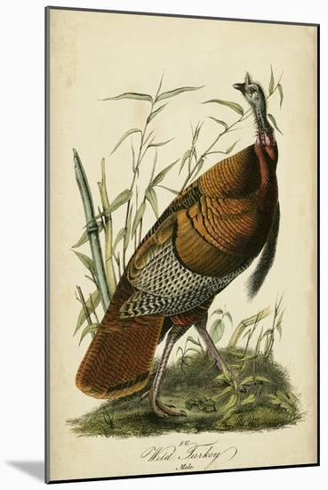 Audubon Wild Turkey-John James Audubon-Mounted Art Print