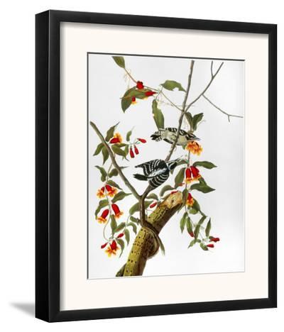 Audubon: Woodpecker, 1827-John James Audubon-Framed Giclee Print