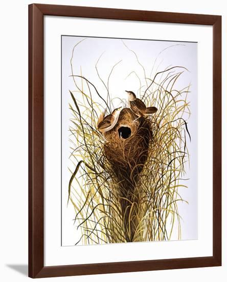 Audubon: Wren-John James Audubon-Framed Premium Giclee Print