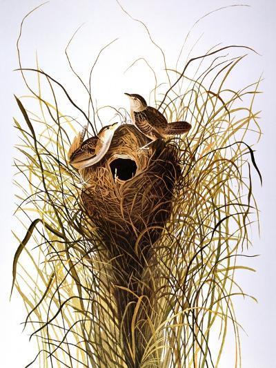 Audubon: Wren-John James Audubon-Giclee Print