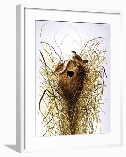 Audubon: Wren-John James Audubon-Framed Giclee Print
