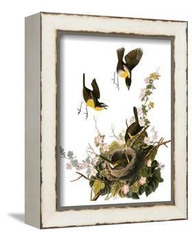 Audubon: Yellow Chat-John James Audubon-Framed Premier Image Canvas