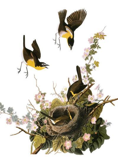 Audubon: Yellow Chat-John James Audubon-Premium Giclee Print