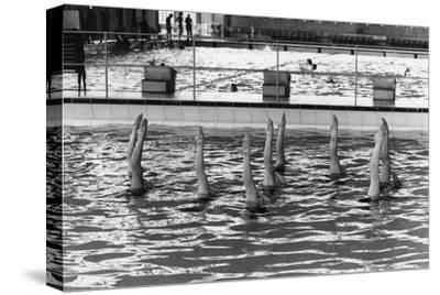 August 1977:  British Synchronized Swimming Team Legs at Euro Championship.