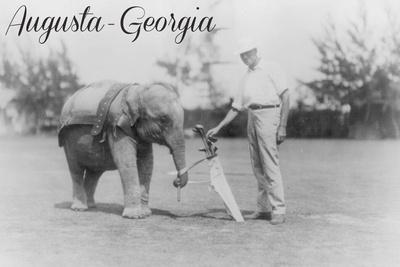 https://imgc.artprintimages.com/img/print/augusta-georgia-elephant-caddie_u-l-q1gqkwt0.jpg?p=0