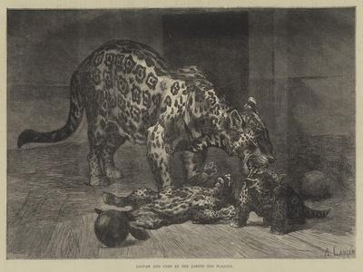 Jaguar and Cubs at the Jardin Des Plantes