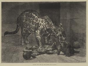 Jaguar and Cubs at the Jardin Des Plantes by Auguste Andre Lancon