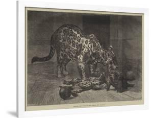 Jaguar and Cubs at the Jardin Des Plantes by Auguste Andre Lancon