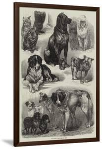 Prize Dogs at the Paris Dog Show by Auguste Andre Lancon