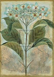 Du Jardin II by Augustine (Joseph Grassia)