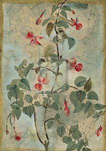 Du Jardin IV by Augustine (Joseph Grassia)