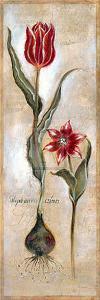 Tulipa Violoncello IV by Augustine (Joseph Grassia)