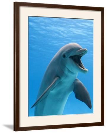 Bottlenose Dolphin Underwater by Augusto Leandro Stanzani