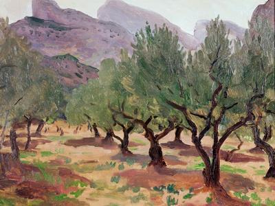 Olives under the Alpilles