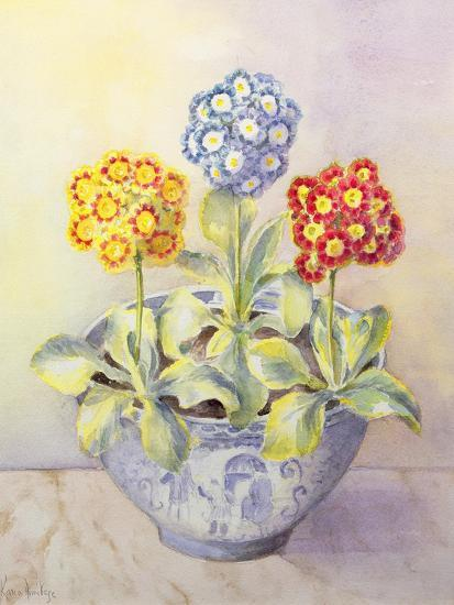 Auricula in a Chinese Pot-Karen Armitage-Giclee Print