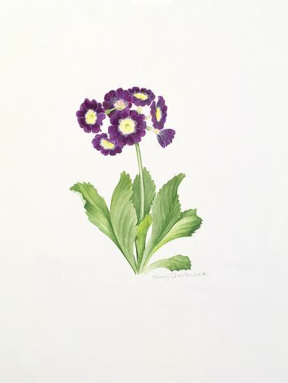 Auricula-Sally Crosthwaite-Giclee Print