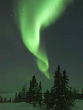 https://imgc.artprintimages.com/img/print/aurora-borealis-in-canada-s-wapusk-national-park_u-l-pzlocn0.jpg?p=0
