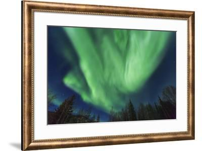 Aurora borealis, Northern Lights, near Fairbanks, Alaska-Stuart Westmorland-Framed Photographic Print