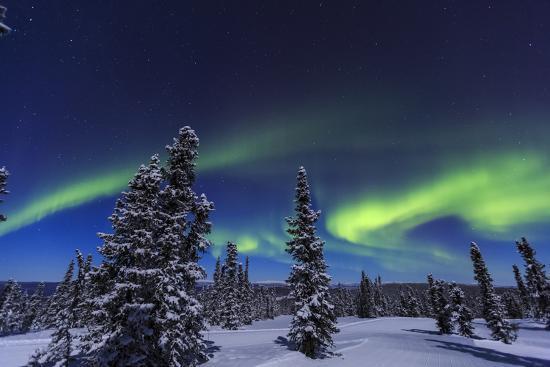 Aurora borealis, Northern Lights near Fairbanks, Alaska-Stuart Westmorland-Photographic Print