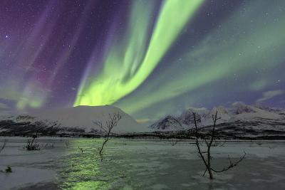 Aurora Borealis on the Frozen Lagoon of Jaegervatnet, Stortind, Lyngen Alps, Troms, Lapland, Norway-Roberto Moiola-Photographic Print
