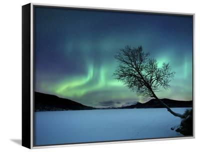 Aurora Borealis over Sandvannet Lake in Troms County, Norway-Stocktrek Images-Framed Canvas Print