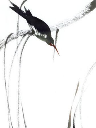 Perched Bird