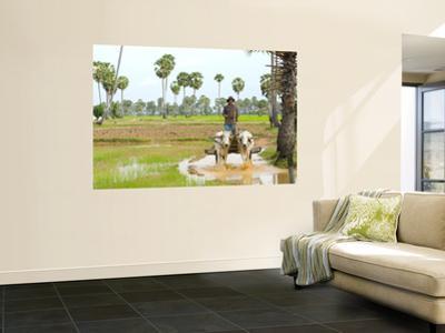 Farmer in Rice Fields North of Phnom Penh