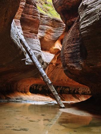 Lodged Tree Above The Subway In Zion National Park, Utah