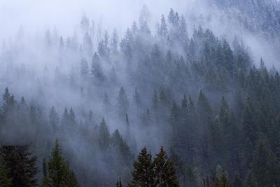 Low Clouds Rolling In And Out Of The Tree Tops In Big Cottonwood Canyon, Utah