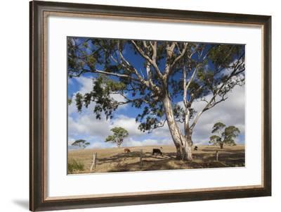 Australia, Fleurieu Peninsula, Normanville, Field with Cows-Walter Bibikow-Framed Photographic Print